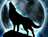 Avatar of Absarroth